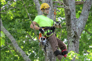 tree services - tree trimming